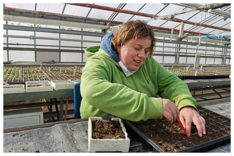 Eine Werkstattmitarbeiterin pikiert Pflanzen in der Gärtnerei